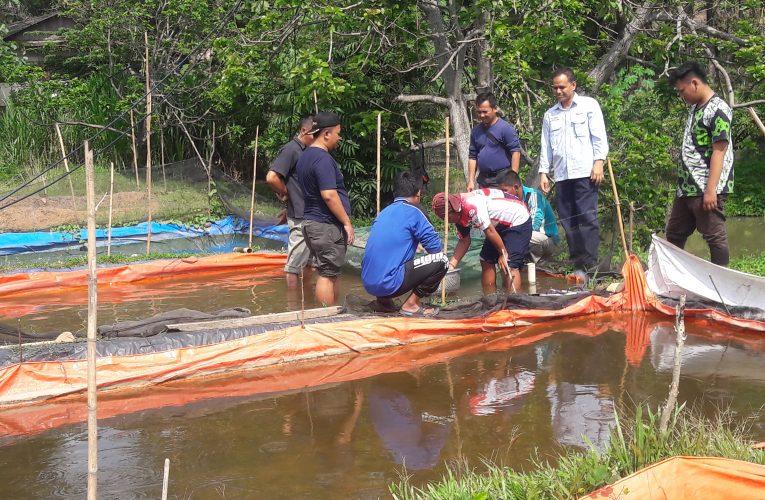 CSR PTBA Latih 12 Peternak Ikan Tradisional Budidaya Ikan Lele