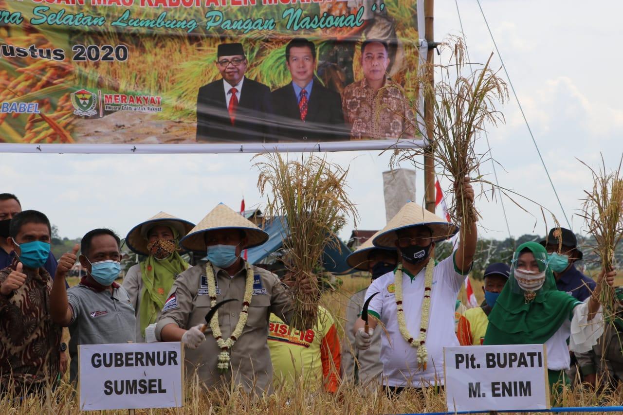 Plt. Bupati Dan Gubernur Sumsel Panen Raya Padi Di Desa Pinang Belarik